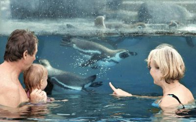 15-05-28-Pinguine_AquaFun
